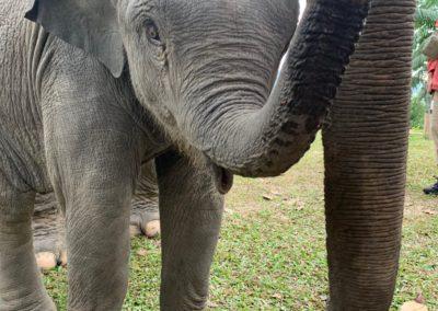 Elefanti al Chay Lay Orchid